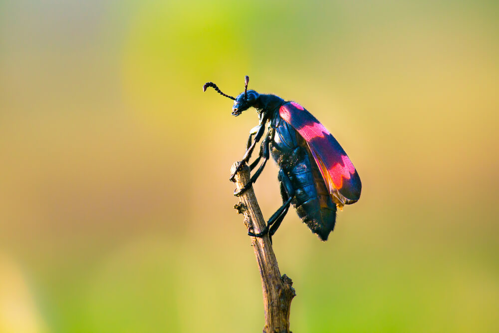 Learn Life Lessons from Insects with CBT